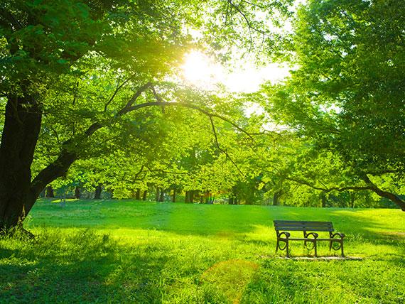 Ein Park in Wien