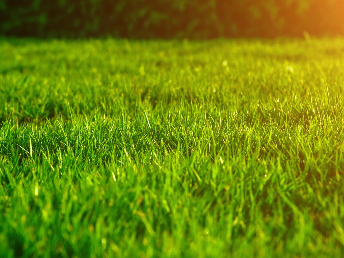 Rasen pflege oder Neuanlage mit Labau.