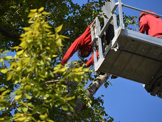 Labau ist ihr Partner für anspruchsvollen Baum -und Strauchschnitt Arbeiten.